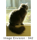 #942 Photography Of A Gray Cat Sitting On A Windowsill
