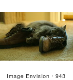 #943 Picture Of Cat Rubbing Against Boots