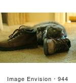 #944 Photography Of A Cat Rubbing Against Leather Boots