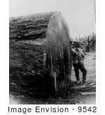 #9542 Picture Of A Man With Sequoia Log