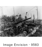 #9583 Picture Of Fir Logging