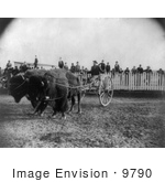 #9790 Picture Of A Buffalo Pulling A Cart