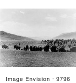 #9796 Picture of a Buffalo Stampede by JVPD