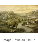 #9807 Picture Of A Buffalo Herd