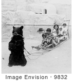 #9832 Picture of a Bear Pulling a Sled by JVPD