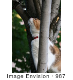 #987 Picture of a Cat in a Tree Looking for Birds by Kenny Adams