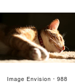 #988 Picture of a Cat Falling a Sleep by Kenny Adams