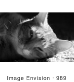 #989 Black and White Picture of a Cute Cat Falling Asleep by Kenny Adams
