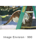 #990 Picture of a Cat on a Ladder by Kenny Adams