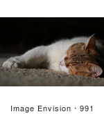 #991 Picture of a Cat Sleeping by Kenny Adams