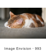 #993 Picture of an Exhausted Cat by Kenny Adams