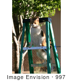 #997 Picture of a Cat on a Ladder by Kenny Adams