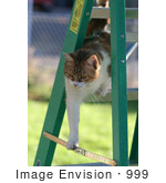#999 Picture of a Cat on a Stepladder by Kenny Adams