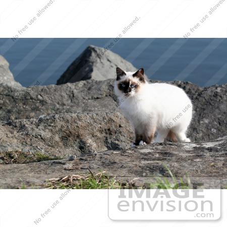 #1069 Picture of a Stray Ocean Cat by Kenny Adams