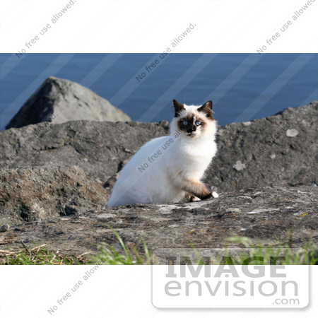#1070 Picture of a Homeless Mongrel Cat at the Rouge River by Kenny Adams