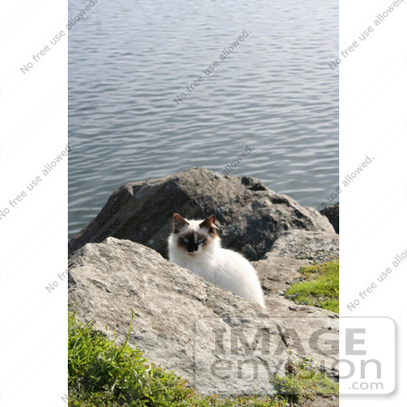 #1089 Image of a Stray Cat at the North Jetty Cats Sanctuary by Jamie Voetsch