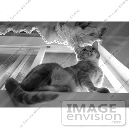 #10895 Picture of a Cat on a Window Sill by Jamie Voetsch
