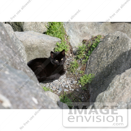 #1114 Picture of a Black Cat Laying on Gravel by Kenny Adams