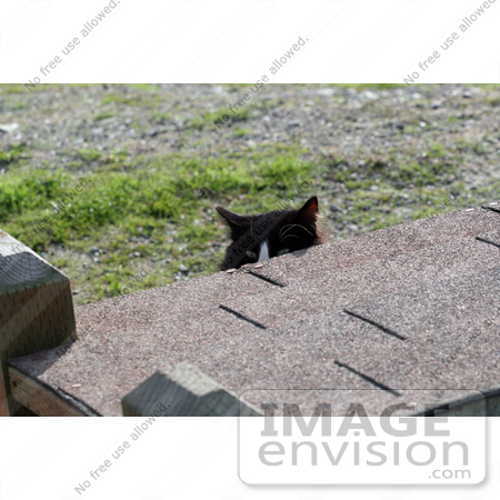 #1120 Picture of a Black & White Cat Peeking at me from Behind a Cat House by Kenny Adams