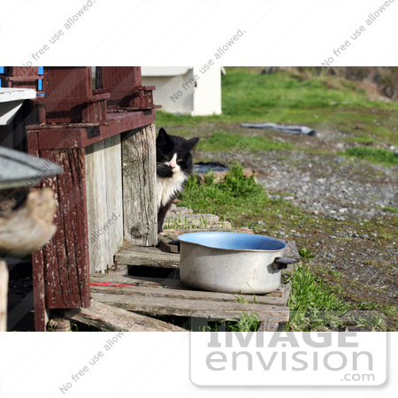 #1121 Picture of a Stray Cat By a Pot of Water by Kenny Adams