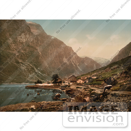 #11564 Picture of a Cow and Village, Gudvangen, Sognefjord, Norway by JVPD