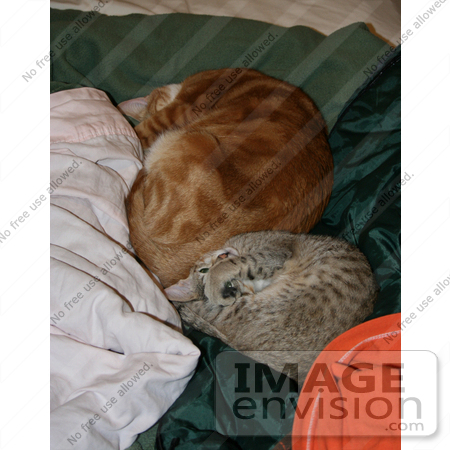 #12213 Picture of Sleeping Cats by Jamie Voetsch