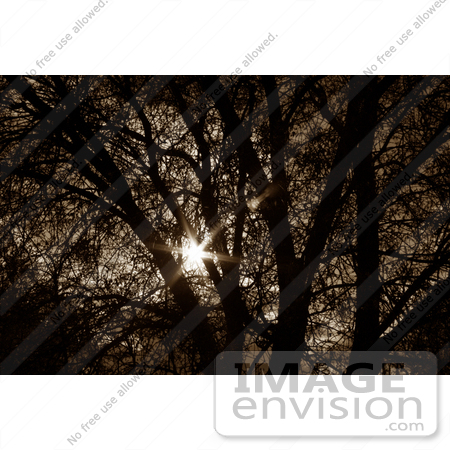 #127 Sepia Toned Stock Image of a Sunburst Through a Tree by Jamie Voetsch