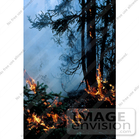 #15199 Picture of a Fire in a Spruce Forest, Innoko NWR by JVPD