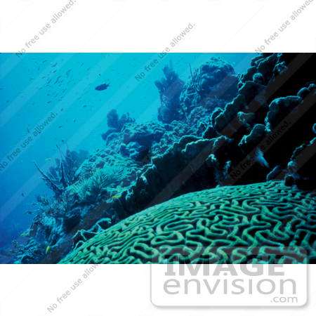 #15518 Picture of a Florida Coral Reef by JVPD