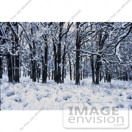 #15629 Picture of Winter in the Forest by JVPD
