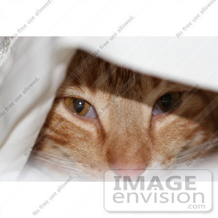 #16 Photography of an Orange Cat Under a Sheet by Kenny Adams
