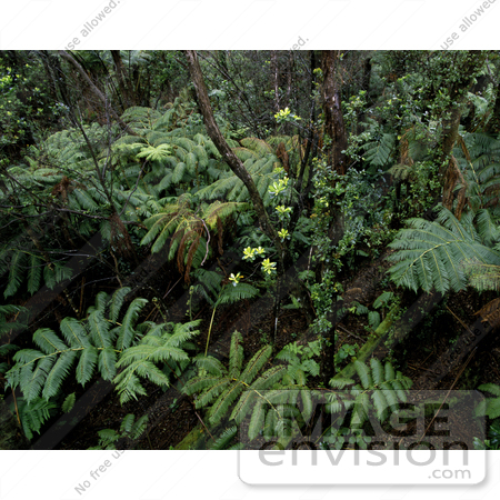 #16029 Picture of Tropical Plants, Hakalau Forest National Wildlife Refuge, Hilo, Hawaii by JVPD