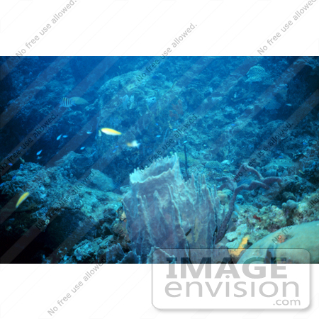 #17279 Picture Of ABlue Reef Scene With A Large Barrel Sponge by JVPD