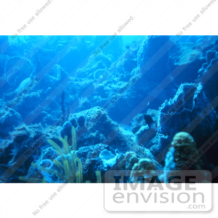#17303 Picture Of A Reef Scene In The Caribbean Sea by JVPD