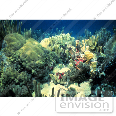#17331 Picture of a Shallow Water Reef Scene With Corals And Sea Life by JVPD