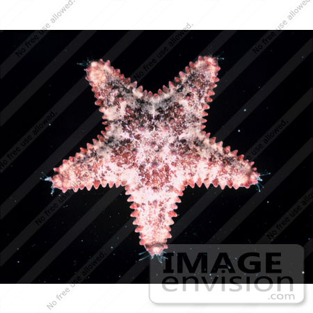#17603 Picture of a Starfish by JVPD