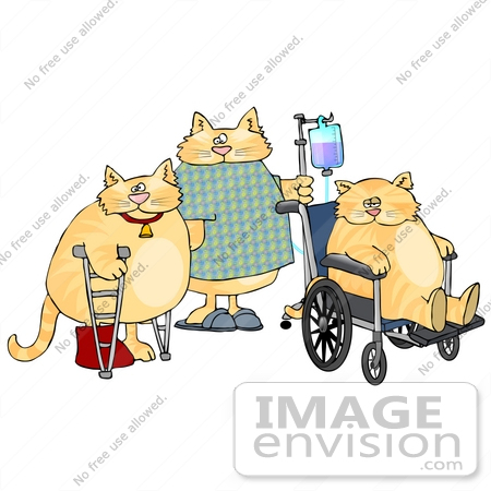 #19442 Three Cats in a Hospital With Crutches, IV and Wheelchair Clipart by