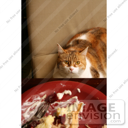 #1956 Cat Sitting at a Dinner Table by Jamie Voetsch