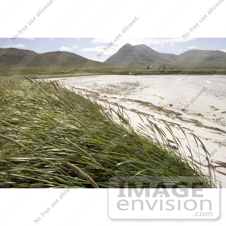 #19855 Photo of Tall Grasses on the Coast at Simeonof Island, Alaska by JVPD