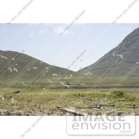 Photo of seagulls flying over coastal land simeonof for Free land in alaska