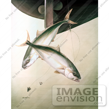 #20962 Clipart Image Illustration of Yellowtail Fish (Seriola lalandei) Swimming After Hooks Under a Boat by JVPD