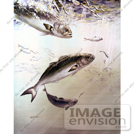 #21001 Clipart Image Illustration of Bluefish Chasing and Feeding Off of Smaller Fish by JVPD