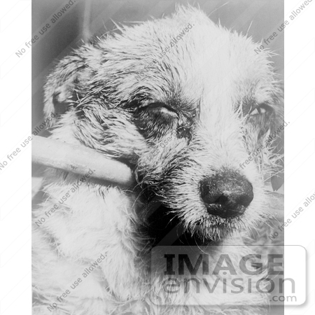 #21595 Stock Photography of a Stick Holding Up a Dog's Head That is Paralized With Dumb Rabies by JVPD