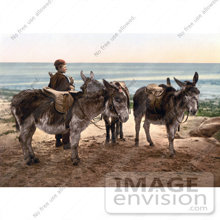 #22236 Historical Stock Photography of a Little Boy by Saddled Donkeys, Waiting for a Job and Standing on a Beach in England by JVPD