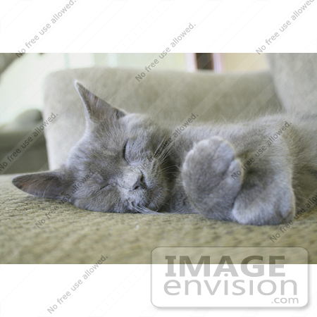 #234 Image of a Gray Kitten Sleeping by Jamie Voetsch