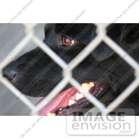 #25 Close-up Photography of a Black Dog Behind Chain-link Fence by Kenny Adams