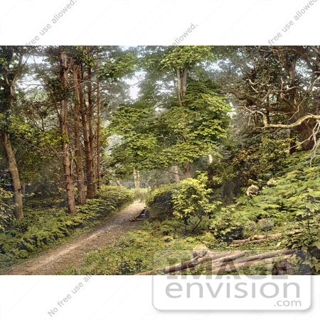 #26884 Stock Photography of A Man Sitting On The Ground Along A Path Through The Woods In Sheringham Norfolk England UK by JVPD