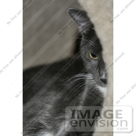 #273 Picture of Cat Laying in a Tunnel by Kenny Adams