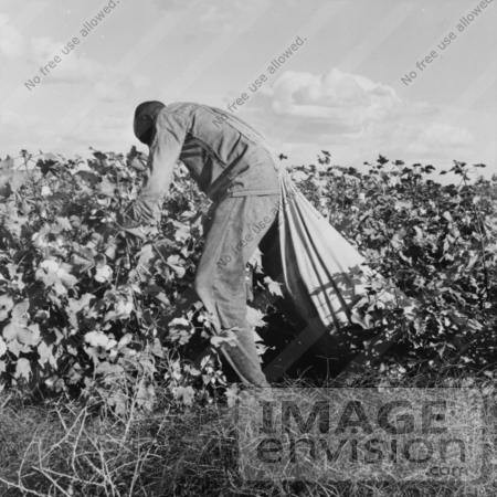 #3050 Cotton Picker by JVPD
