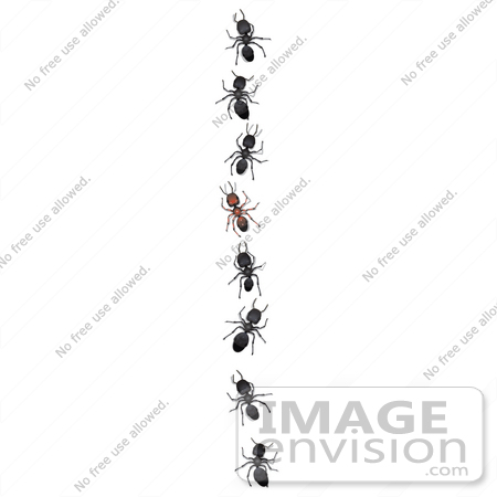 Ants In A Line Clip Art  35762 Clip Art Graphic of